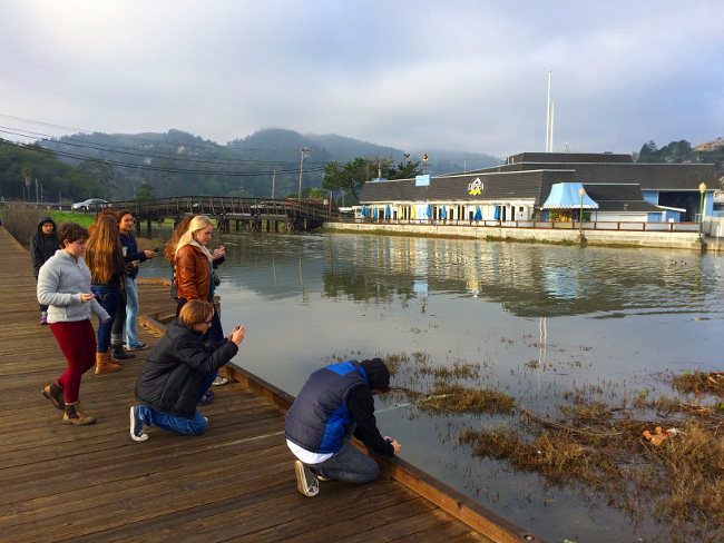 MSEL students photograph King Tides in Tam Junction