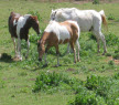 Three horses in a field.