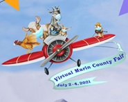 An artistic graphic showing cartoon farm animals flying an antique plane with a banner saying Virtual Marin County Fair July 2-4