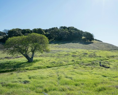 Green hills and trees of Deer Island Open Space Preserve in Novato.