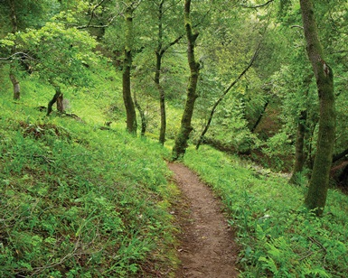 A dirt trail winds through a lush green forest