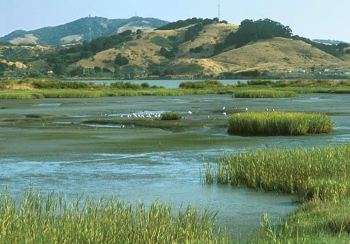 Tidal Marsh near Hamilton Fields