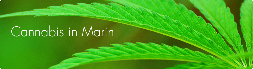 Image of marijuana leaves and Cannabis in Marin
