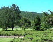 Scenic view of the San Geronimo Golf Course
