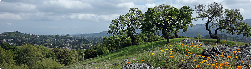 Mount Burdell Open Space Preserve